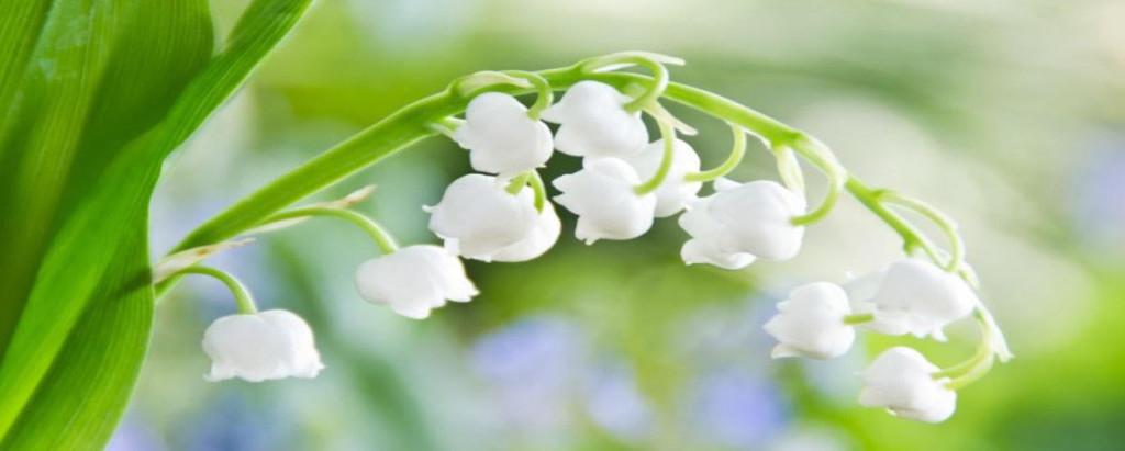 white-flower-alt